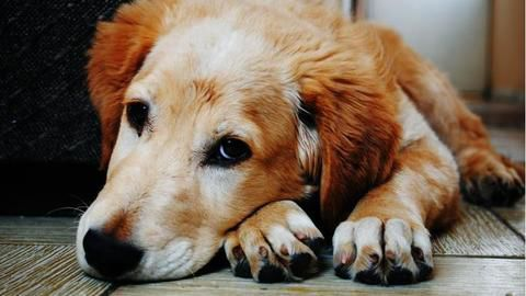 Chhattisgarh man gets son arrested for killing his pet dog