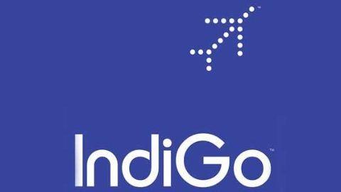 Indigo profits at a 300% record high