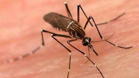 All about dengue in a nutshell!