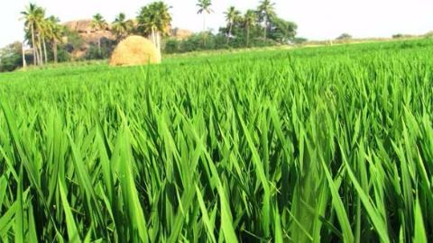 Programme Kisan launched by government