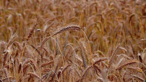 Modi government launches insurance scheme for farmers
