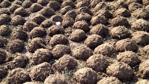 Clean Ganga: Dung cakes to replace firewood