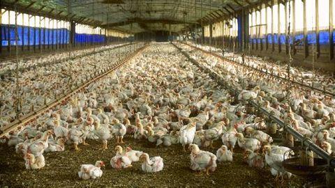 Bird Flu Scare: Delhi Govt. issues health advisory
