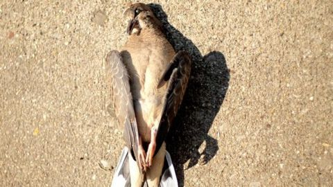 Delhi Bird flu death toll hits 73